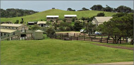 Ace Hi Riding Ranch - Accommodation 4U