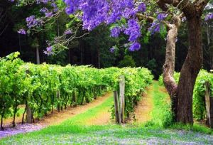 Bago Vineyards - Accommodation 4U