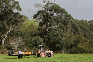 Boronia Farm - Accommodation 4U